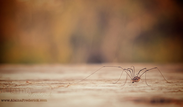 AlainaFrederick-Photography-Spider